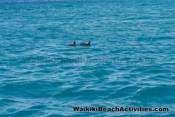 Hilton Hawaiian Village Waikiki Beach Photo Gallery: Port Waikiki Boat Tour Cruise At Hilton